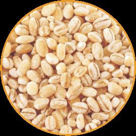 Kongbap Barley